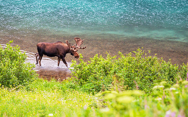 Alaska Cruisetours Shore Excursions