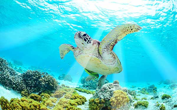 Southern Caribbean Shore Excursions