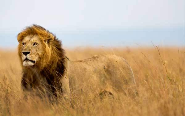 Africa Cruises from $229.00!*