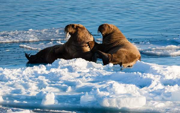 Arctic Cruises from $10,900