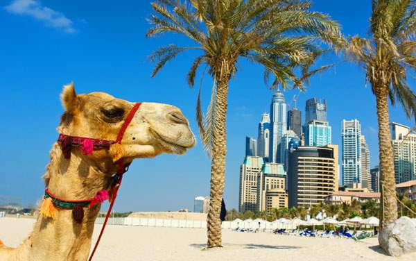 Dubai and Indian Ocean Cruises from $399.00!*
