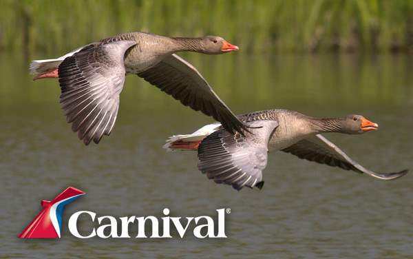 Carnival Canada and New England cruises from $499*