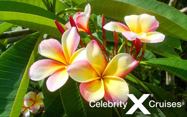 Celebrity Hawaii cruises from $1,049*