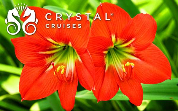Crystal Caribbean cruises from $2,125*