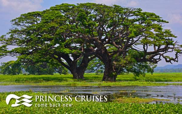 Princess Asia cruises from $399*