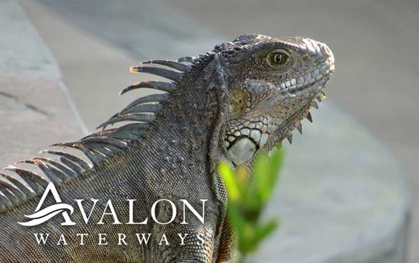 Avalon Waterways Galapagos cruises