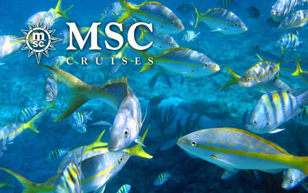 MSC Cruises Bahamas cruises from $119*