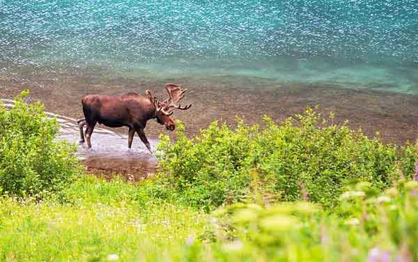 Alaska Cruisetours