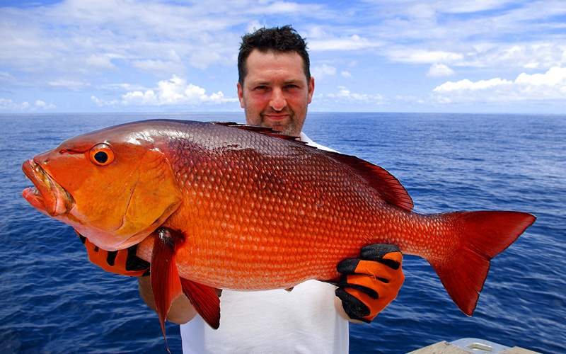 Fisherman and Red Snapper Royal Caribbean Bermuda