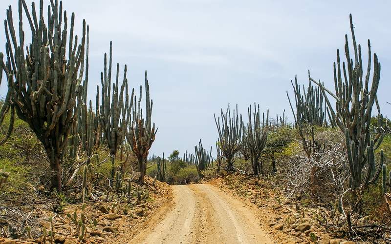 Desert Road in Bonaire Royal Caribbean