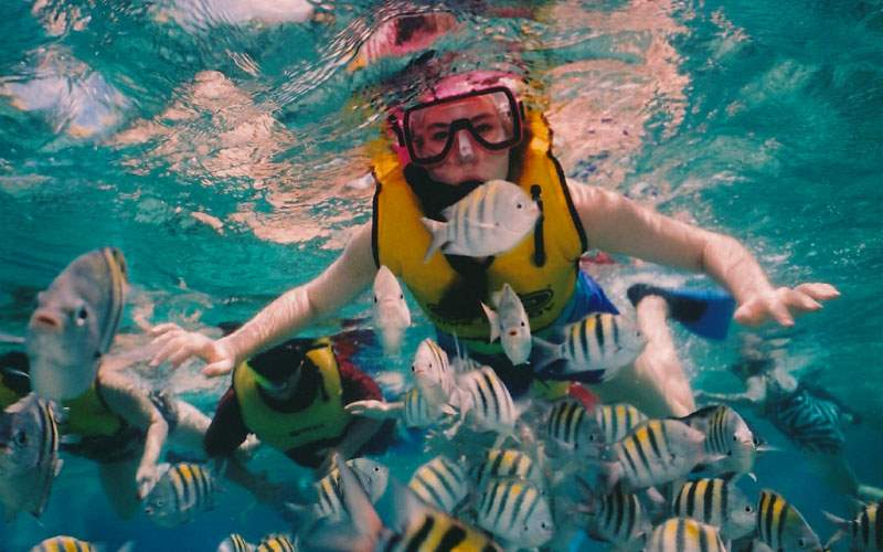 Snorkeling with Fish in Roatan