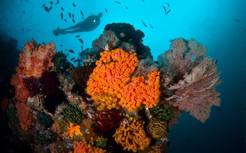 A diver explores a coral reef off Komodo Island