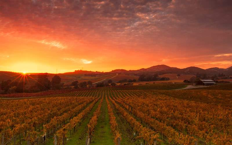 Sunrise over the vineyards of world famous Napa Va