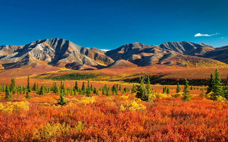 Autumnal Denali Nt. Park scenery with mountain ran