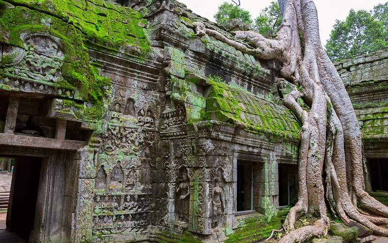 Ta Prohm Temple Siem Reap Cambodia Avalon Waterway