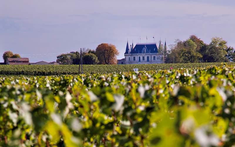 vineyard at Chateau Margaux Azamara Club Cruises