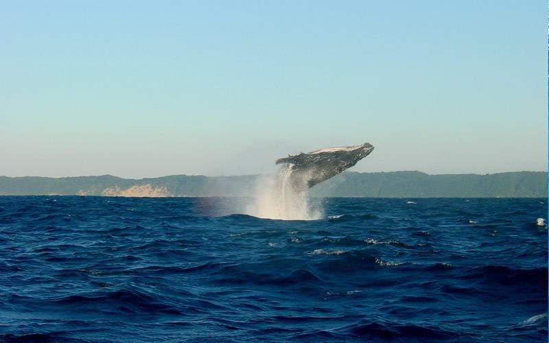 See Majestic Whales in Hawaii