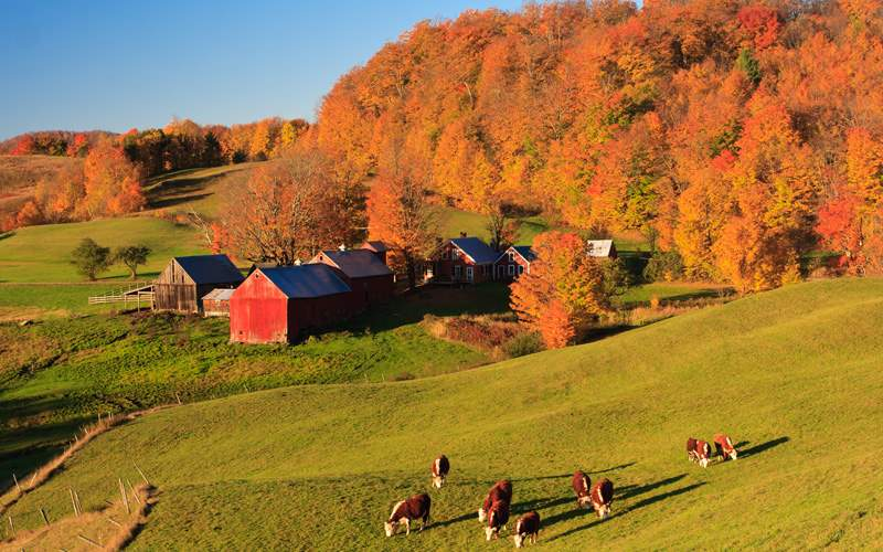 New England Cruisetours Fall Colors