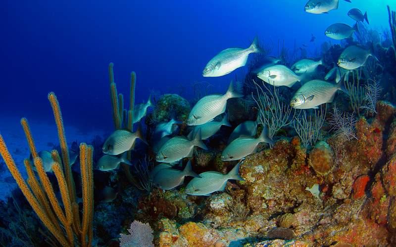 Bermuda coral reef Carnival Cruises