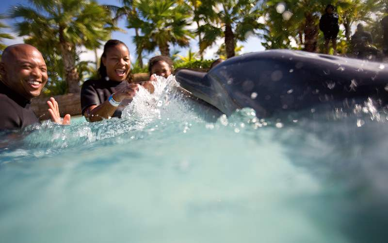 Swimming with dolphins Carnival Cruises Bahamas