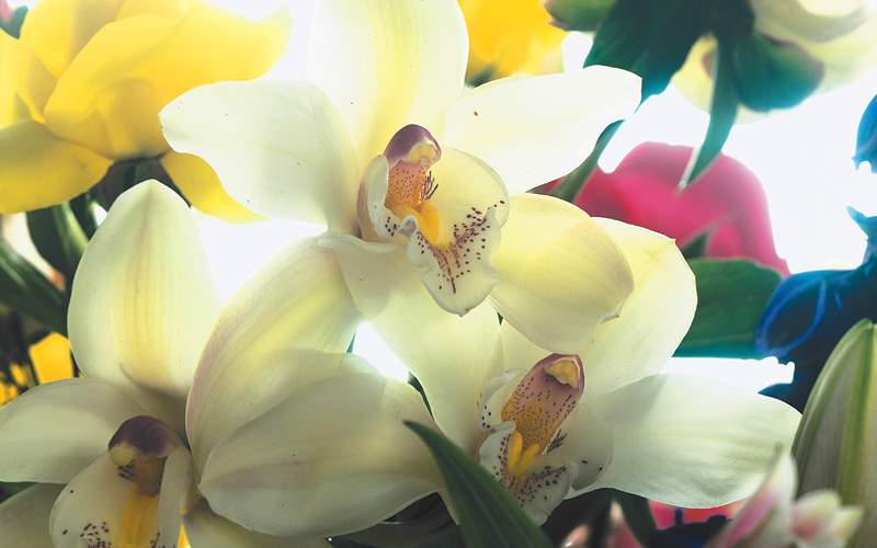 Assortment of orchids Celebrity Cruises Hawaii