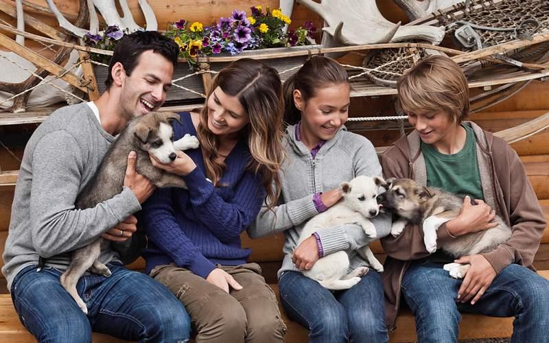 Alaska puppy husky dogs Celebrity Cruises