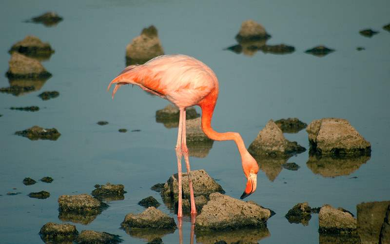 flamingo standing in the water Celebrity Cruises