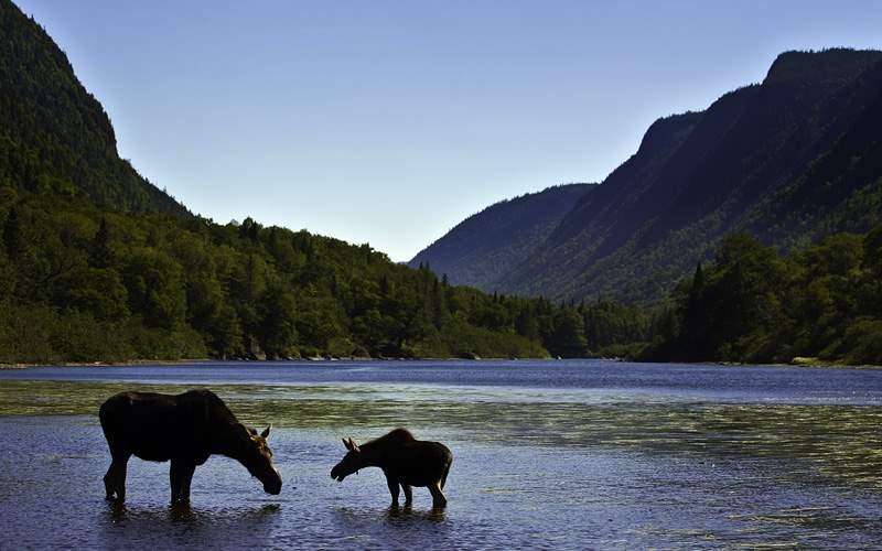 Canada National Park Jacques Cartier Celebrity