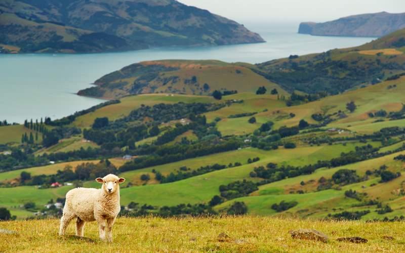 banks peninsula New Zealand