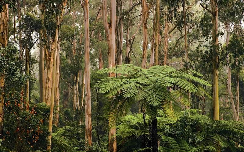 Sherbrooke Forest Melbourne Celebrity Cruises