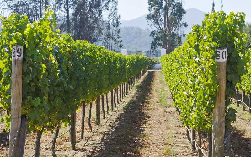 Celebrity South America Cruisetours Vineyard