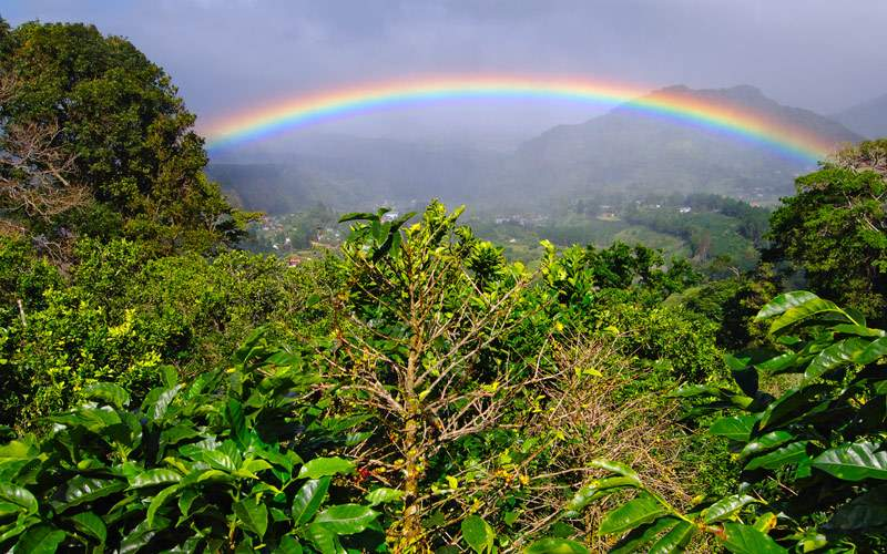 Coffee Plantation and rainbow in Boquete Panama