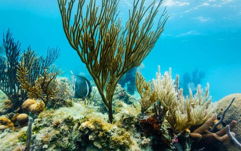 Coral Reef off Eastern Coast of Belize