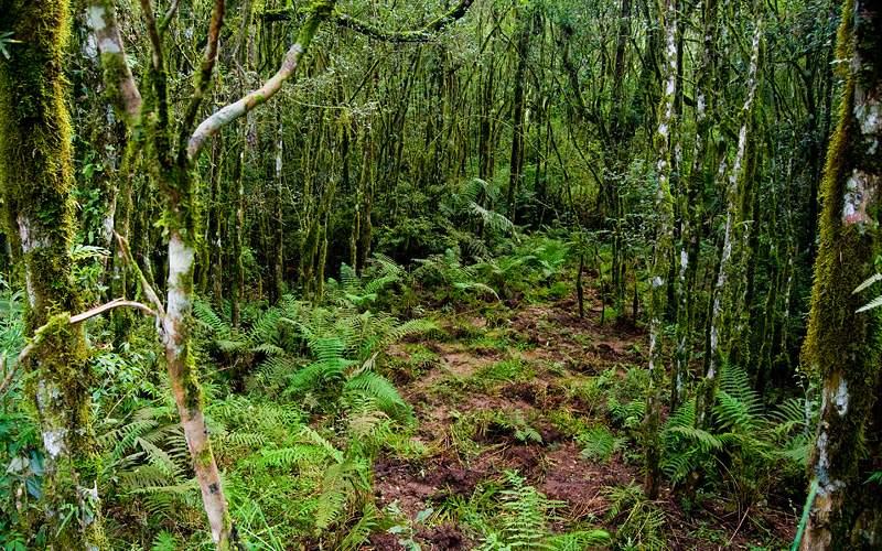 Atlantic Rainforest Southern Brazil Crystal Cruise