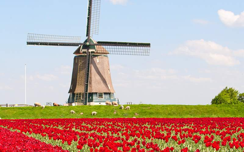 Holland tulips and windmill Crystal Cruises World