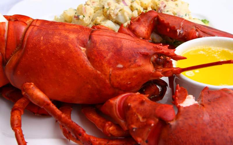 Delicious fresh Maine lobster
