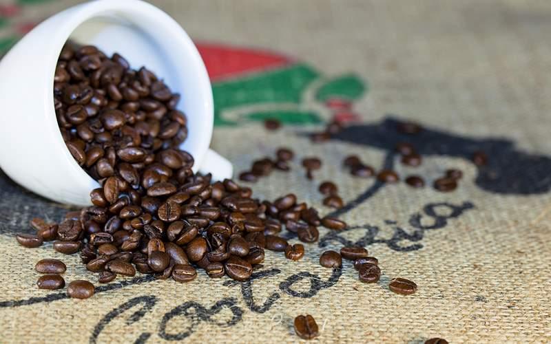 Costa Rican coffee beans Holland America Panama