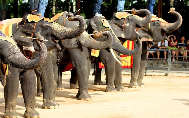 Elephant show, Thailand Holland America World