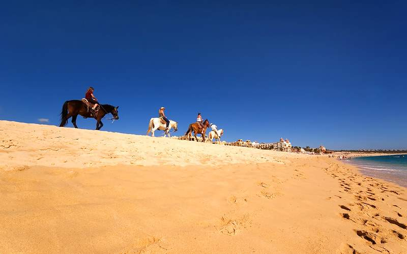 Los Cabos beach horse riding Holland America Line