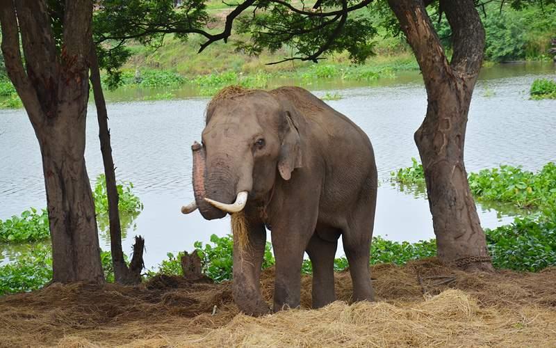 Ayutthaya Elephant Camp, Thailand Holland America
