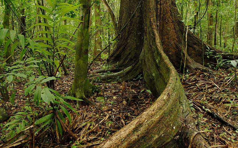 Chagres national park, Panama Holland America