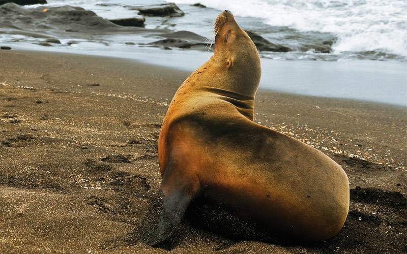 The Galapagos is home to many sea lions