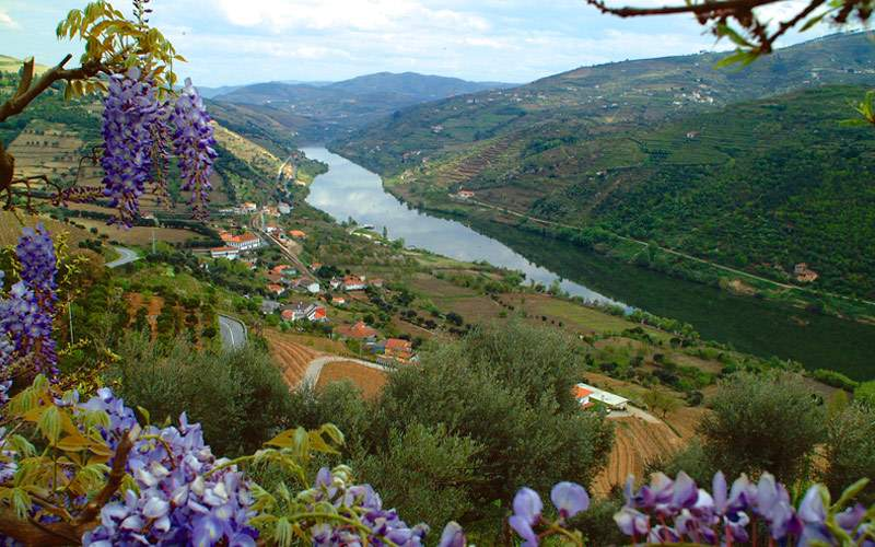Douro River Valley in Portugal
