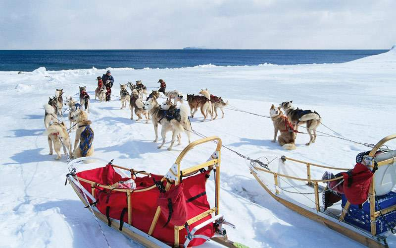 Dog sled excursion in Alaska
