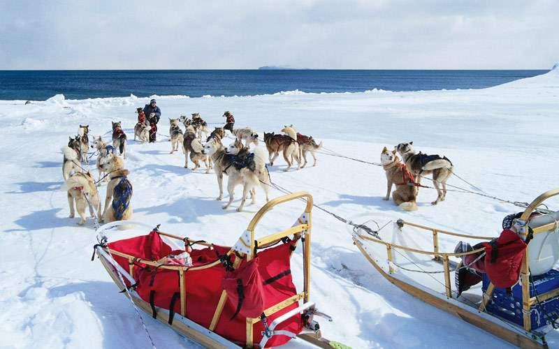 Dog sled excursion in Alaska