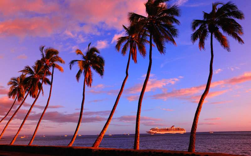 Lahaina palm trees sway in the sunset