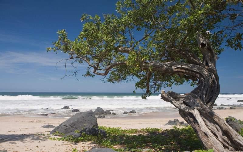 Weathered tree in Manzanillo Bay, Mexico