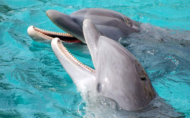 Laughing dolphins Cozumel Mexico