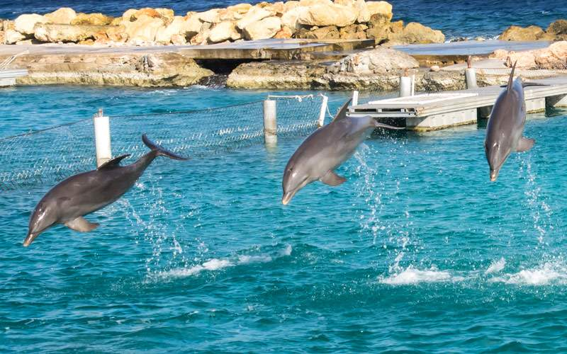 Dolphin excursion MSC Cruises Southern Caribbean