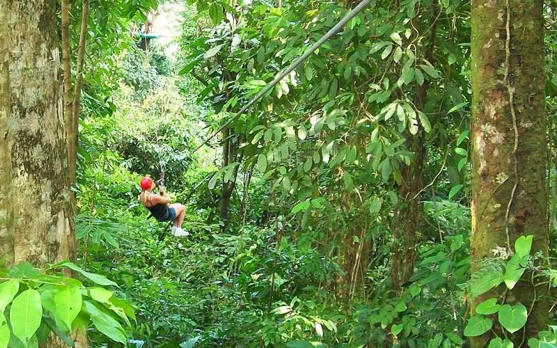 Zipline in Basseterre